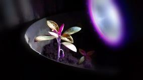 Ljus blommaosmloke ooo Royaltyfria Bilder