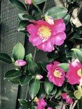 ljus blommapink arkivfoton