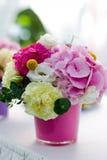 Ljus blommavanlig hortensia Arkivfoton