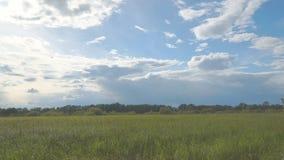 Ljus bris skakar gräset, under en molnig himmel på bakgrunden av skogen lager videofilmer