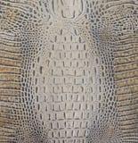 Ljus - brun alligatorbuktextur Royaltyfri Fotografi