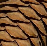 Ljus - brun textur med grankottar Pinecone makrofotografi Arkivfoto