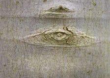 Ljus - brunt och gräsplan värma sig av en bakgrund för bokträdträd och ett grafiskt bruk arkivbilder
