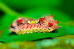 ljus caterpillar Arkivbild