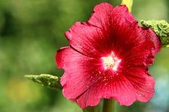 Ljus dag för blommaår Arkivfoto
