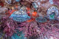 Ljus detalj av Tidepool över och under vatten royaltyfri fotografi