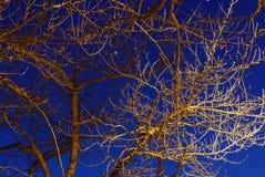 Ljus effekt på filialer av träd på natten Royaltyfri Bild