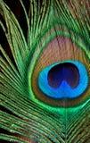 ljus färg Royaltyfria Bilder