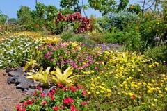 Ljus färgrik trädgård Royaltyfria Bilder