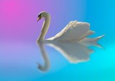 ljus färgswan arkivfoto