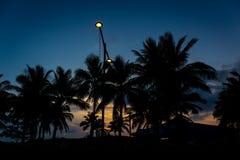 Ljus för kokosnötskuggasolnedgång med ljus på Fe som känner sig ledsen Arkivbild