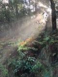 Ljus för söndag morgon i skog arkivfoton