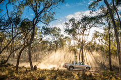Ljus för träd för skog för varubillastbil arkivfoton