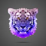Ljus för sida för Bengal tiger poly - lila Arkivbild