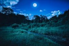 Ljus fullmåne ovanför vildmarkområde i skogen, serenitetnatur Royaltyfri Fotografi