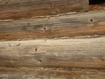 Ljus - grå bakgrundsfärg - träjournalväggstruktur arkivfoto