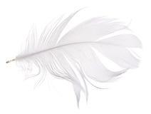 Ljus - grå gåsfjäder som isoleras på vit Arkivfoto