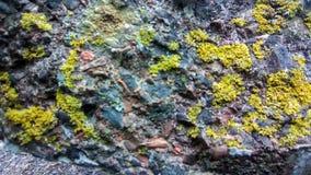 Ljus - grönt mossigt vaggar bakgrund fotografering för bildbyråer