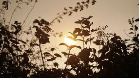 ljus gul sol Royaltyfri Foto