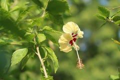 Ljus - guling Royaltyfria Bilder
