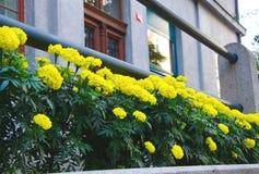 Ljus guling blommar med träingångsdörrar Arkivfoton
