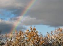 Ljus härlig regnbåge över träden Fotografering för Bildbyråer