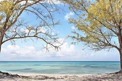 Ljus - havssikt för blått vatten till och med träden royaltyfria bilder
