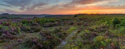 ljus himmel på soluppgång över heathland Arkivfoto