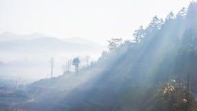 Ljus i dimma Arkivbild