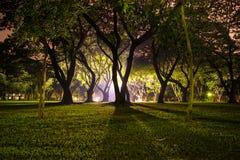 Ljus i skog Royaltyfria Bilder