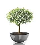 Ljus kula för träd Royaltyfria Bilder