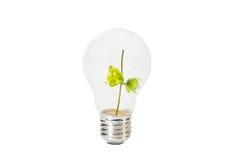 Ljus kula med den gröna filialen inom Royaltyfria Foton