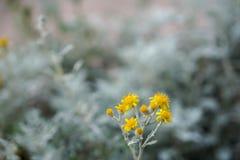 Ljus liten gul blomma på skuggor av grå suddig konstbakgrund under vår Arkivbilder