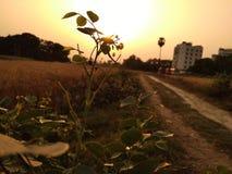 Ljus ljusnar växten fotografering för bildbyråer