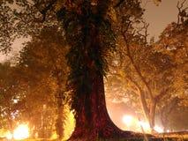 Ljus målat träd på natt 2 Arkivfoton