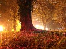 Ljus målat träd på natten Royaltyfria Foton
