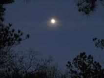 Ljus måne för molnfri himmel Arkivbilder