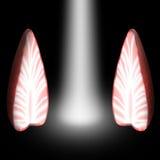 Ljus mellan de två halvorna av jordgubbar Fotografering för Bildbyråer