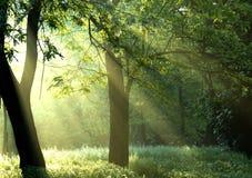 ljus morgon Royaltyfri Bild