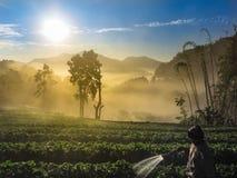 Ljus morgon vind, dimma, solljus arkivbilder