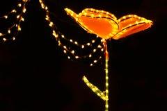 ljus natt för blomma Arkivfoton