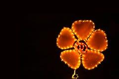 ljus natt för blomma Royaltyfria Bilder
