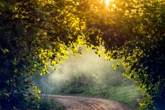 Ljus natur och mist för soluppgång arkivfoton