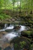 ljus naturlig ström för skog Royaltyfri Bild