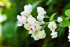 Ljus naturlig vit blomma med suddig bakgrund Arkivbild