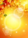 Ljus nedgångaffisch med varmt solsken, höstlönnlöv, inskrift, effekten av solglödet vektor Royaltyfri Fotografi