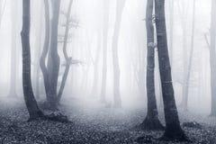 Ljus och blå mist i skogen Arkivbilder