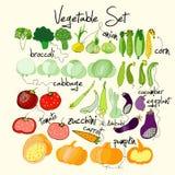 Ljus och färgrik grönsakuppsättning vektor Arkivfoto