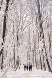 Ljus och insnöat skogen Fotografering för Bildbyråer