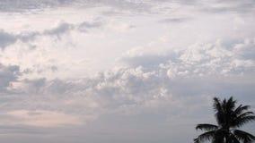 Ljus och kokospalm för himmelmolnmorgon royaltyfri fotografi